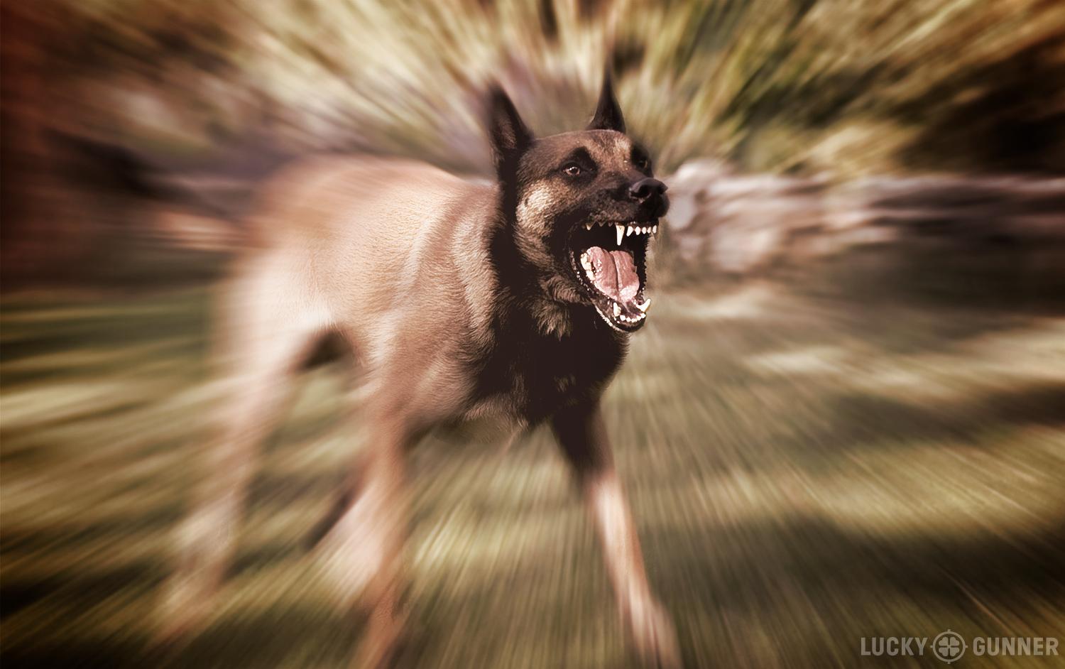 angry-dog-1